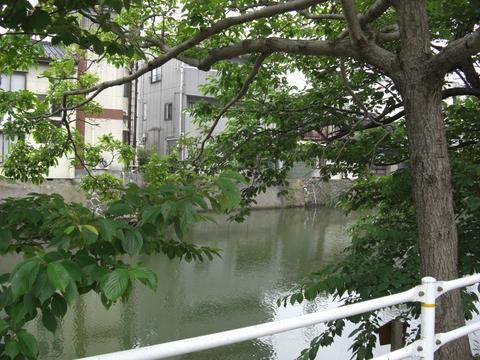 東(ひがし)京橋のなんじゃもんじゃ